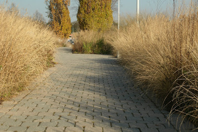 autumn_ornamental_grasses_entry_walk_toronto_botanical_garden_by_garden_muses: a_Toronto_gardening_blog