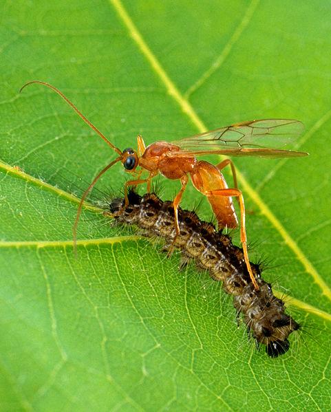 agroregeneration gypsy moth problem beginning to resolve
