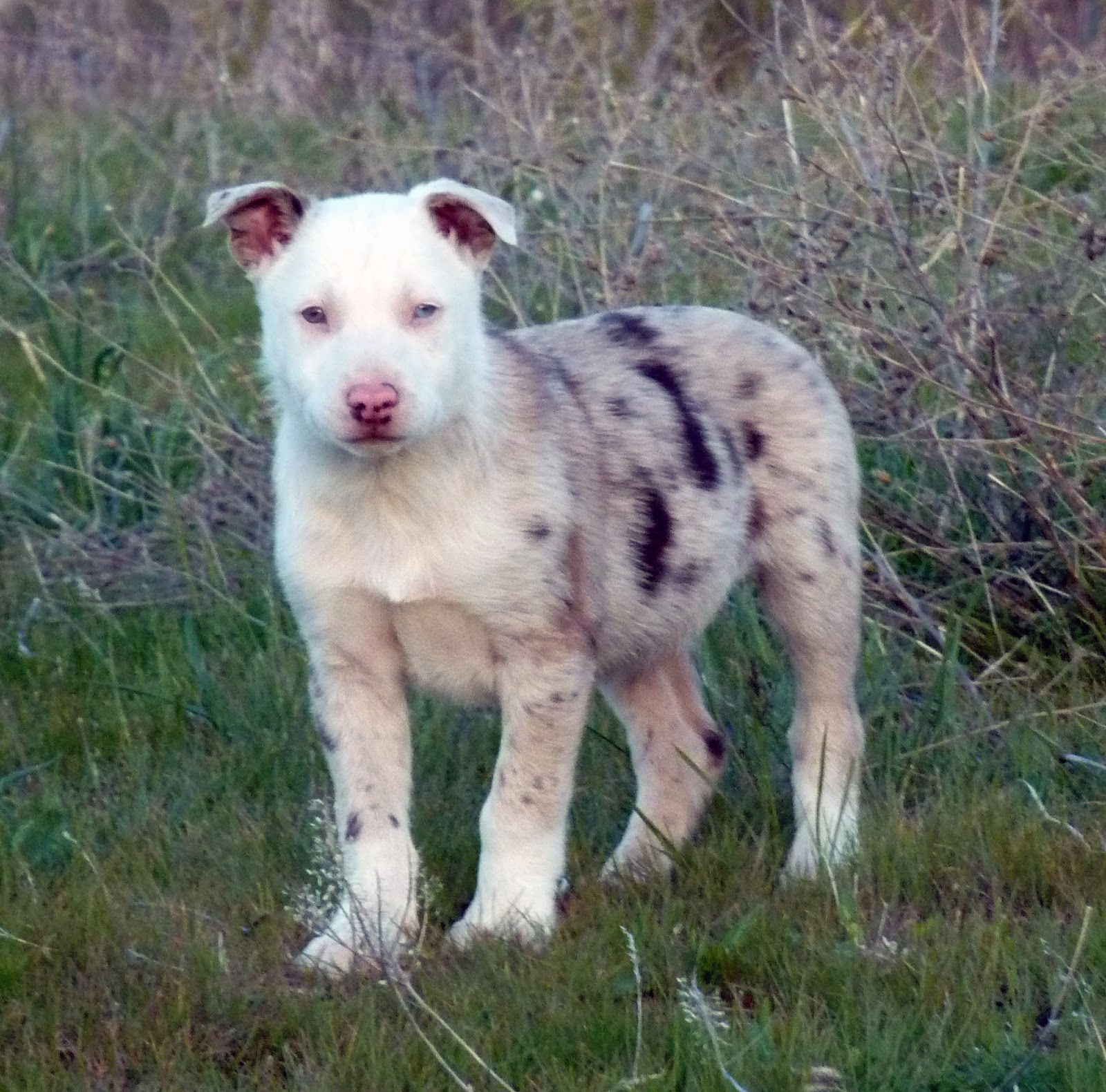 Hanging tree cow dogs for sale - Thread Lost In The Woods A Cautionary Tale