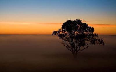 Gambar Pohon dan Kabut Keren