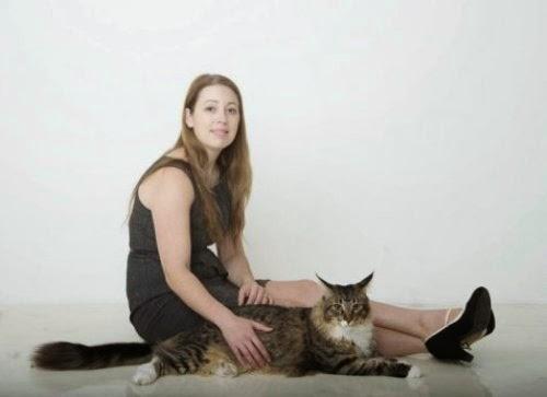 kucing terbesar di inggris