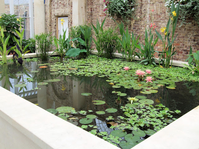 Arte y jardiner a plantas de estanques acu ticos for Estanques y jardines acuaticos