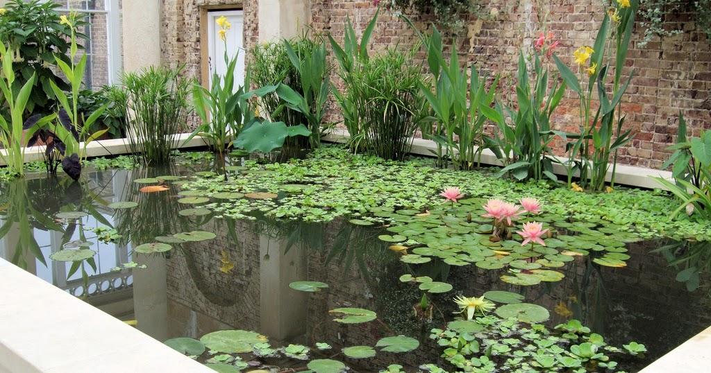 arte y jardiner a plantas de estanques acu ticos