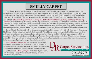 Keeping Carpet Clean & Smelling Sweet: Scientific Tips