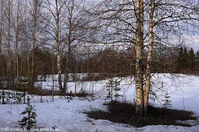 Norrbotten natur