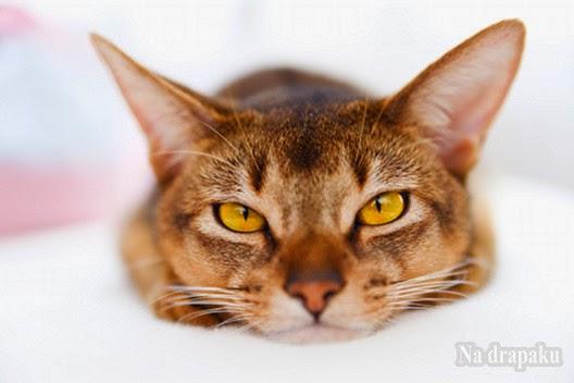 Jak dbać o kocie oczy?