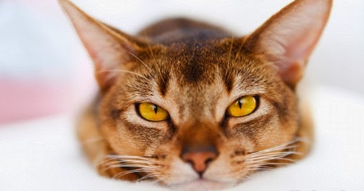 [Obrazek: jak-dbac-o-kocie-oczy.jpg]
