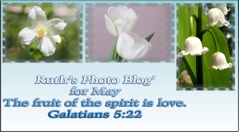 Ruth's Photo Blog