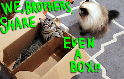 cat-share-box-01