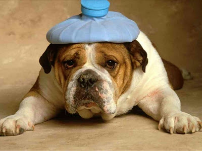 Funny dog with a headache and hotwater bottle
