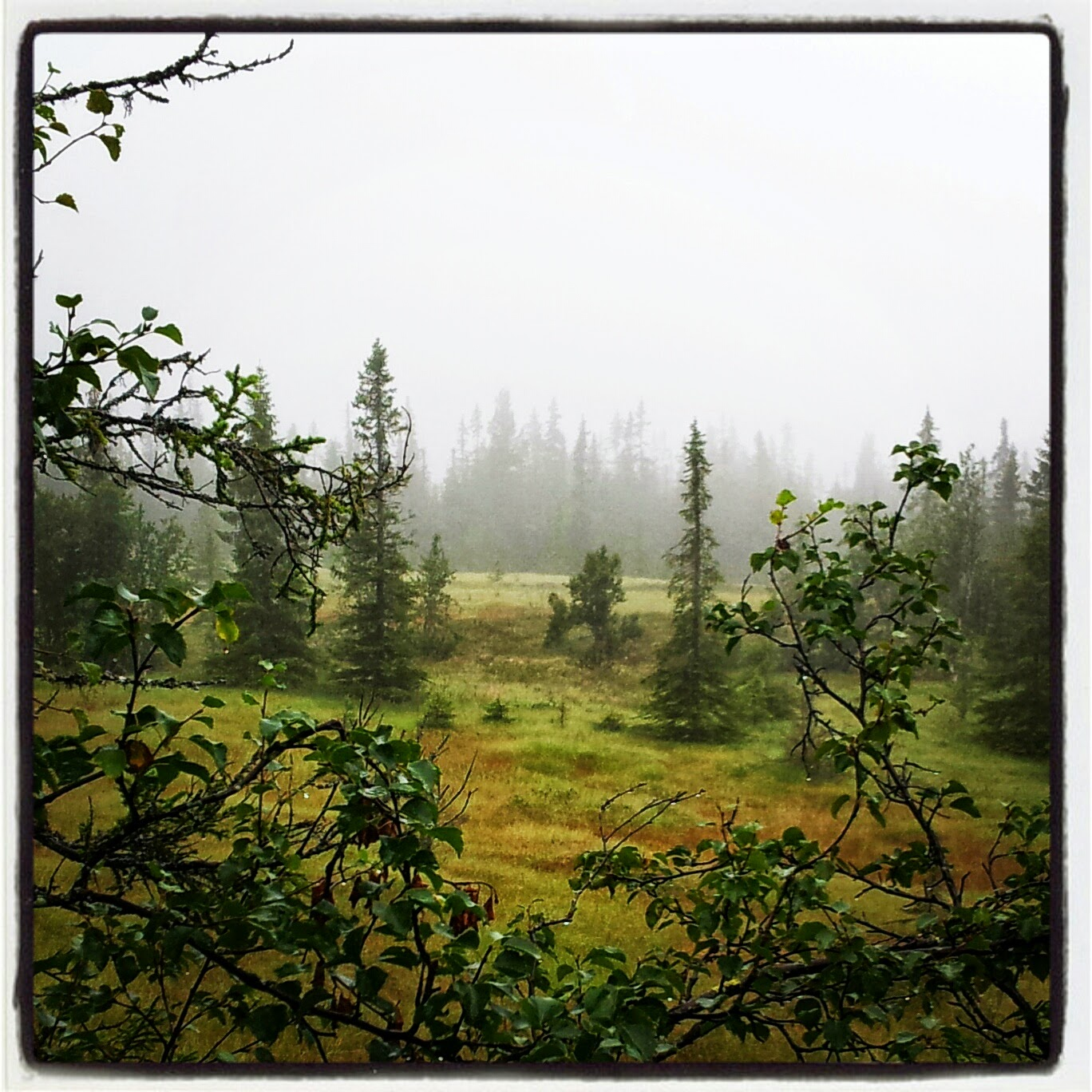 Utsikt fra Vesle Ølslykkja