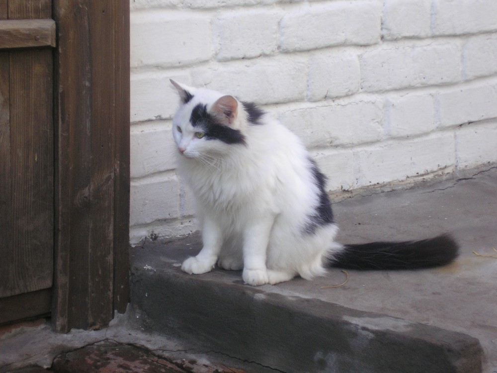 кошки из музея-заповедника Тарханы