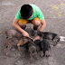 "This boy finds 6 big ""rats"" behind a church. 1 year later they look completely different"