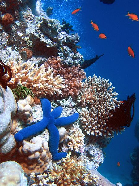 Animals of the world: Coral Reef - photo#26
