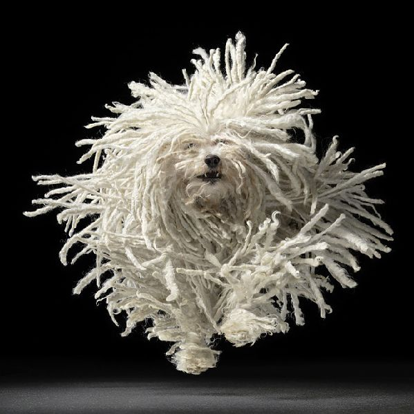 foto,perro,fotografia,dog,corriendo,running,run,lanas,pelo,blanco