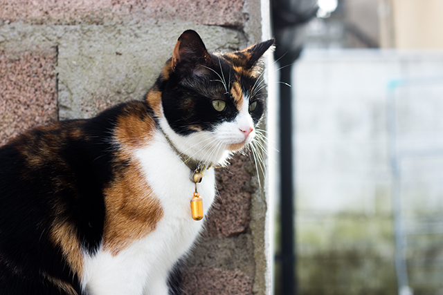 ava the cat