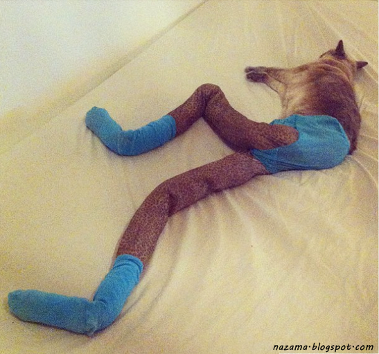 foto kucing lucu dan imut