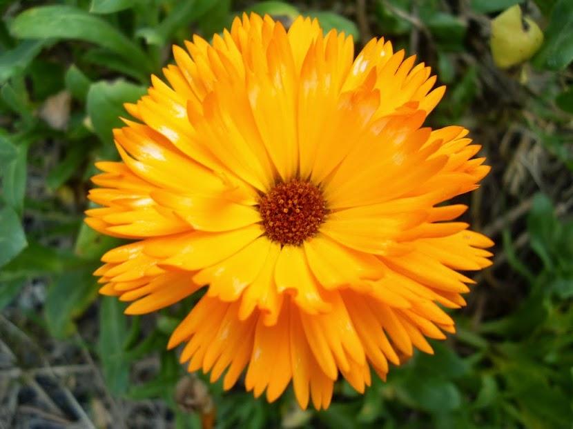 El alma en flor