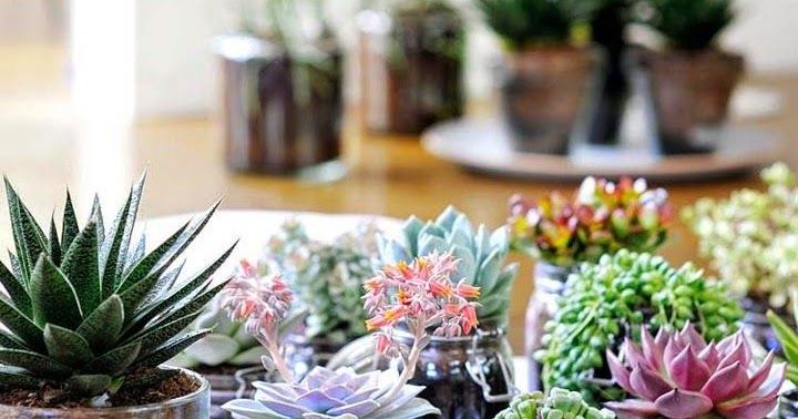 Plantas que llenar n tu hogar de feng shui mi casa es feng for Plantas para el hogar feng shui