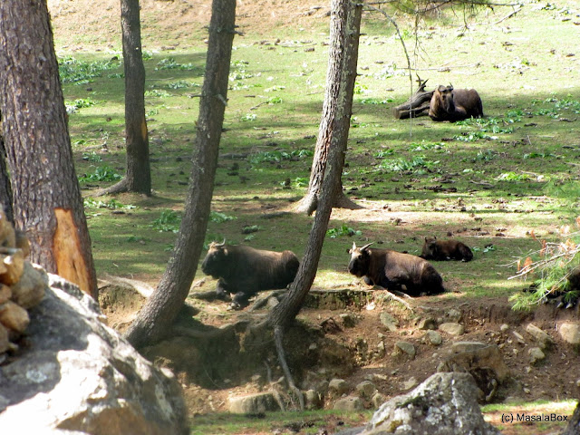 takin preserve