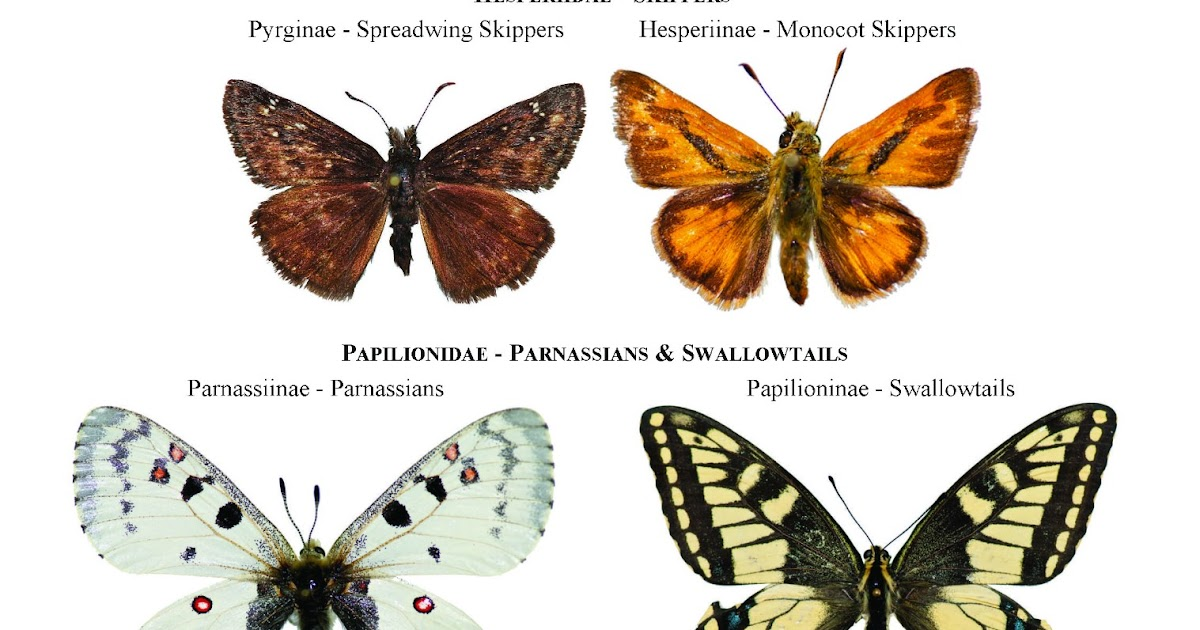 an analysis of the butterfly and an ant in the kingdom of animals Keywords: mitochondrial genomics, gene order analysis, gene order  example  of convergent evolution in gos for the whole animal kingdom.