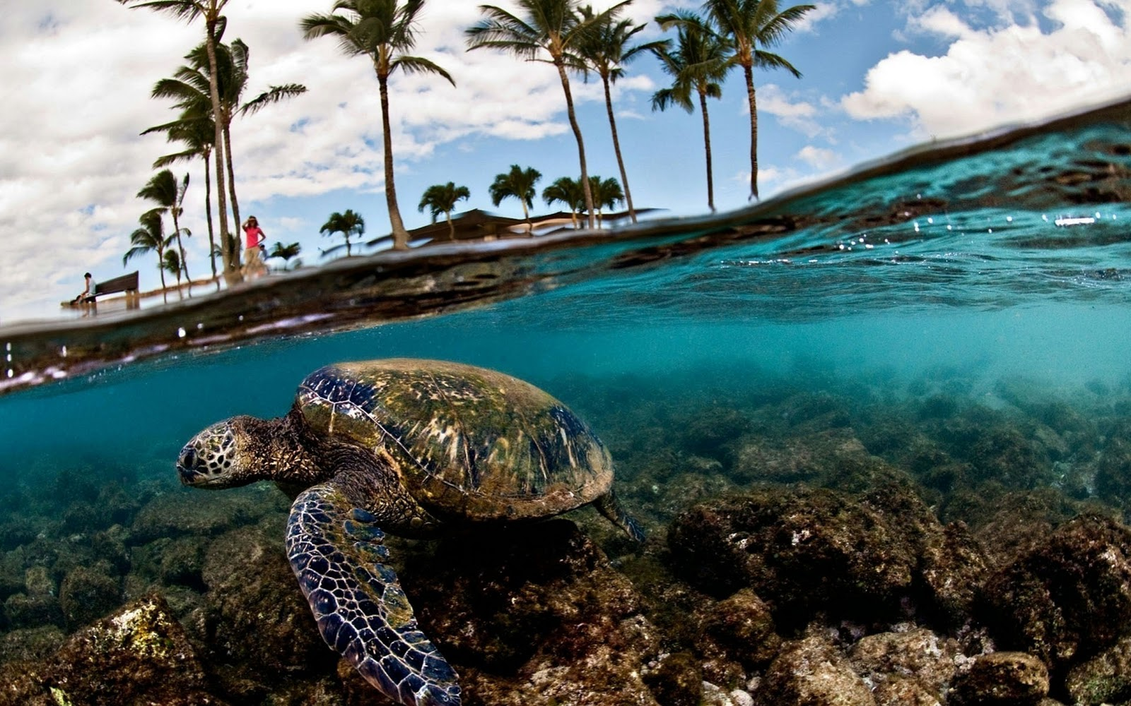 http://1.bp.blogspot.com/-kTjSrnTaNVI/TyAaklnmLvI/AAAAAAAAXvk/6RDa9Y5U4xA/s1600/Schildpadden-achtergronden-dieren-hd-schildpad-wallpapers-foto-3.jpg