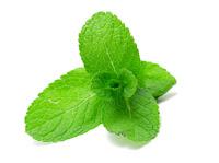 daun mint vitamin untuk rambut