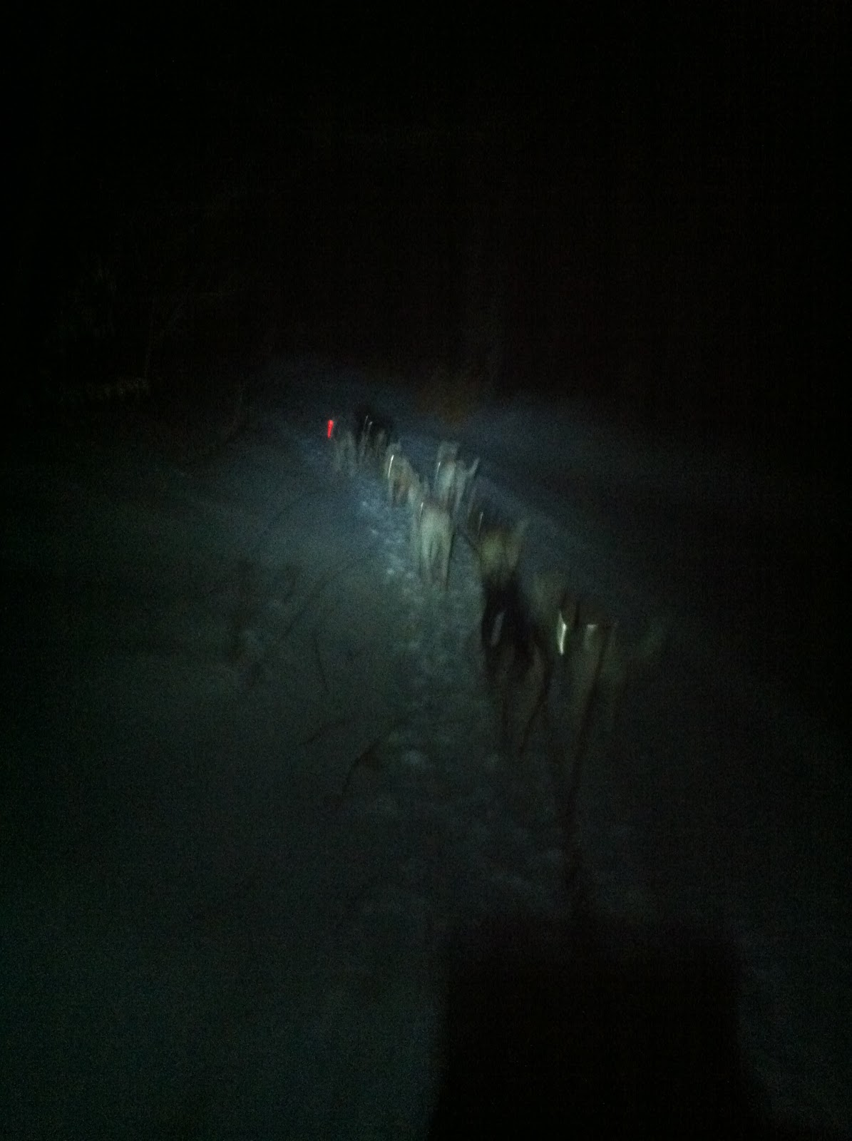 Image Result For Midnight Sun Dog