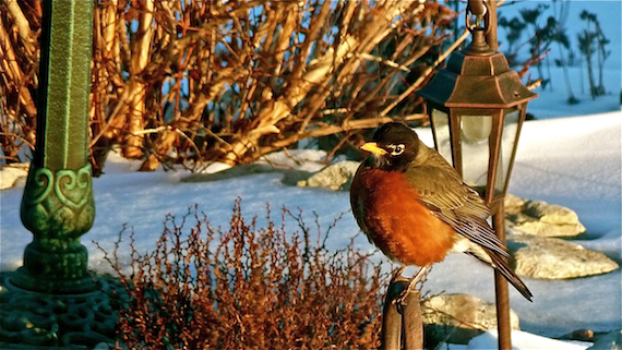 a robin bird perched on a light post