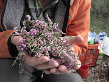 Heather clippings from her purple rinse