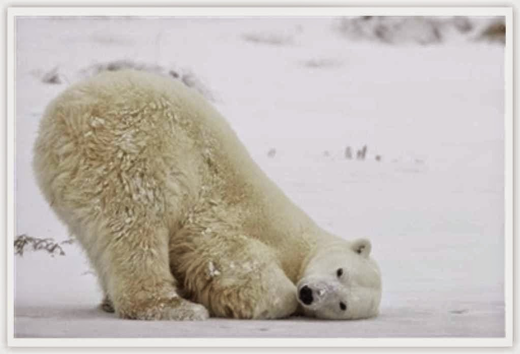 gambar beruang kutub gambar beruang madu gambar beruang panda gambar