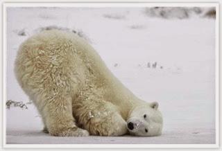 gambar beruang kutub gambar beruang madu gambar beruang panda gambar ...