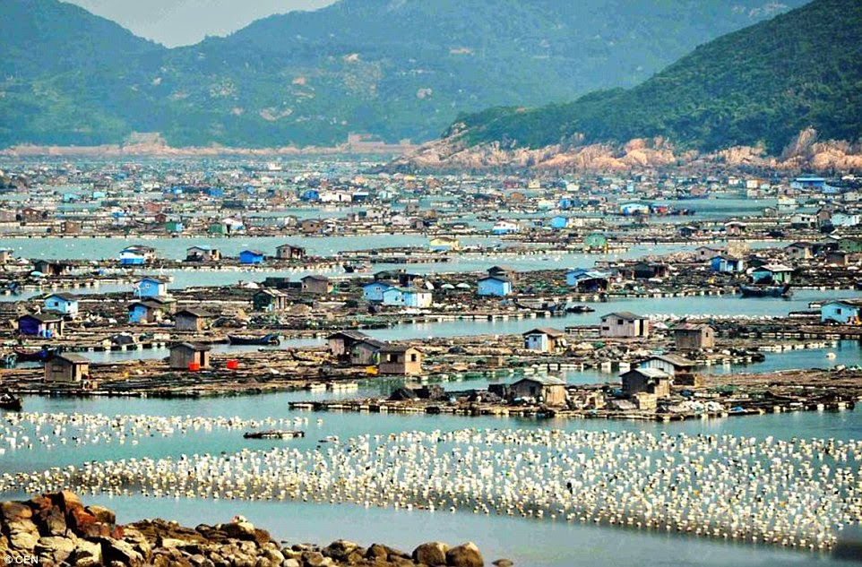 http://www.dailymail.co.uk/news/article-2773835/The-incredible-floating-cities-China-Entire-bays-covered-wooden-homes-provide-two-thirds-world-s-seafood.html