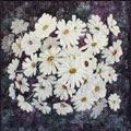 Daisie Field by Denise Rheeder-Sargo