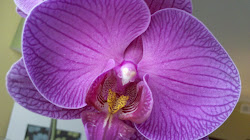 Orchid of Hope