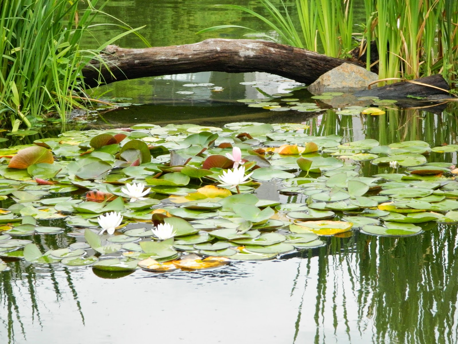 lilies and lotuses at the museum