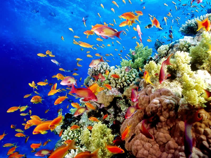 The beautiful and amazing Great Barrier Reef