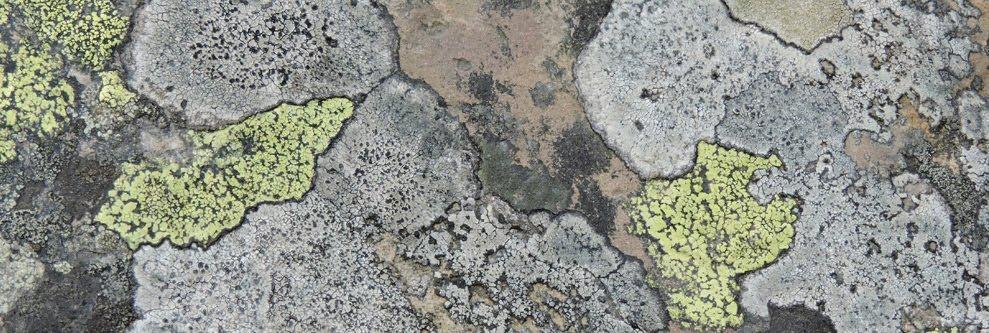 Skev's BLOG : Pan-species Listing, Moths, Birds, Stuff