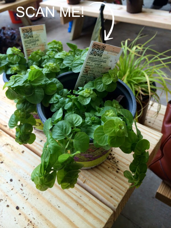 container gardening tips from the experts