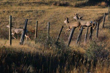 DEER FENCING, ELECTRIC, CONVENTIONAL, WIRELESS FENCING