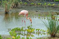 Flamingo Lake, Isabela Island, Galapagos