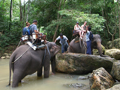 Book Elephant Trekking Trip Namunag Jungle Trip Koh Samui