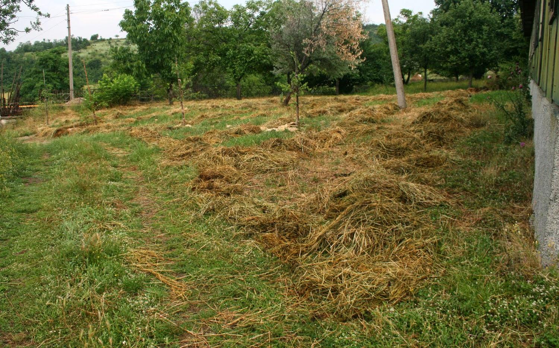 Hay now hopefully will dry