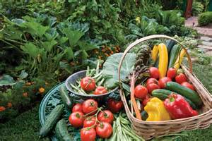 Bio, légumes, jardin, naturel, nutrition, santé,