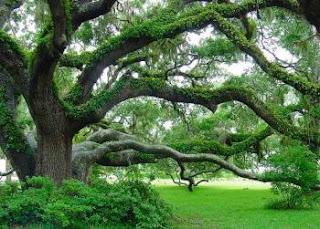 Elements Of Landscape Design | Home Garden And Landscaping