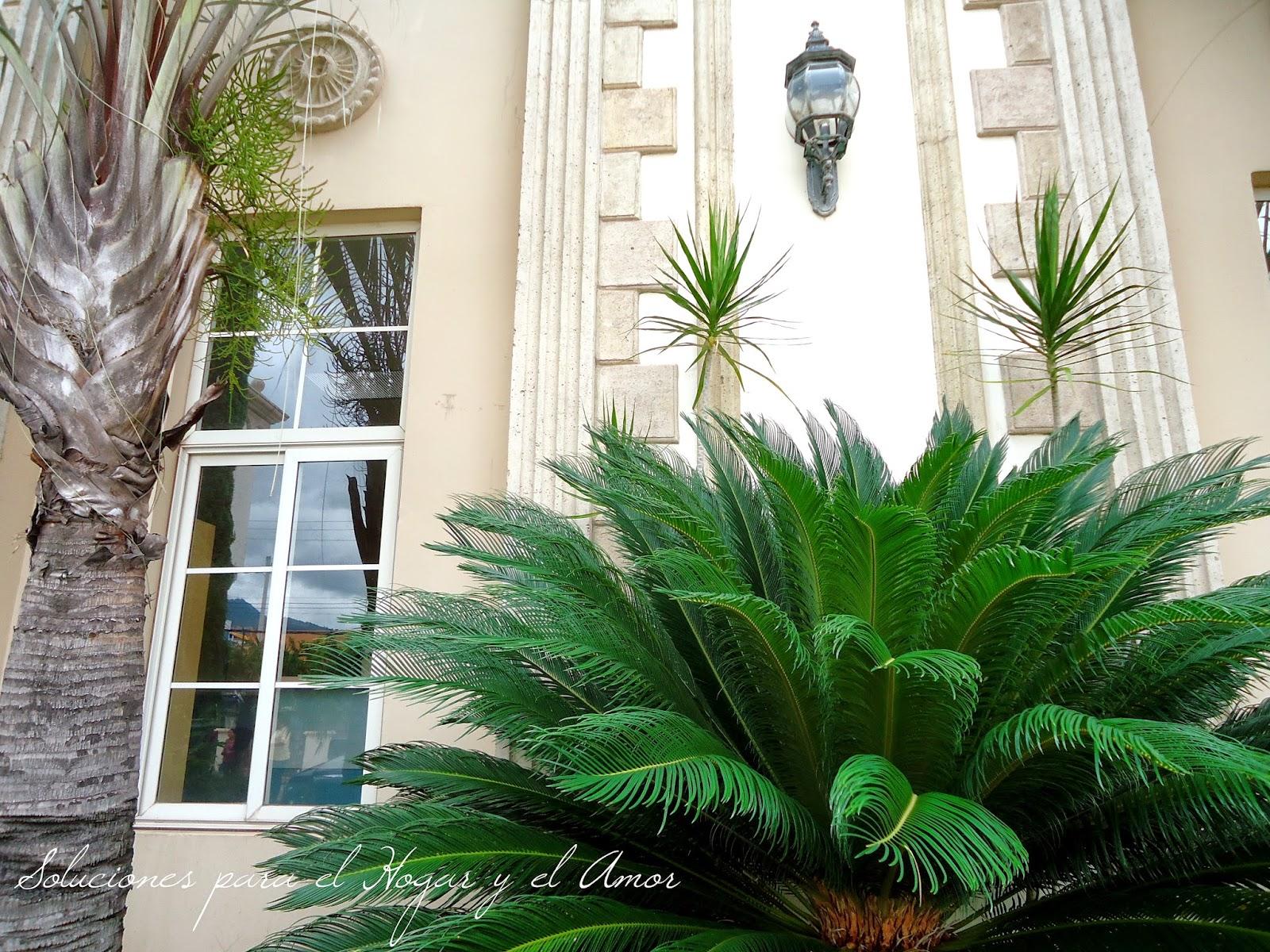 plantas, jardín, ventana,