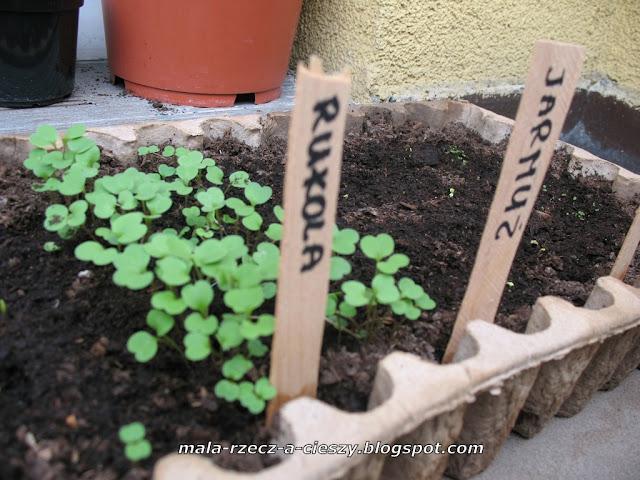 Jak oznakować roślinki na balkonowym ogródku?