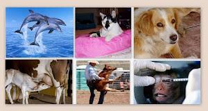 Animais ame-os-e-os- Deixe Viver