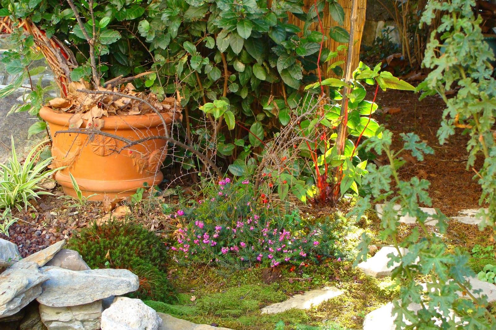 Jardine et ris mes 6 astuces une pour ne plus for Jardin jardine