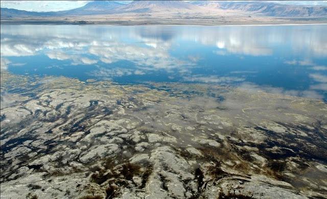 Danau Natron Paling Unik dari Tanzania